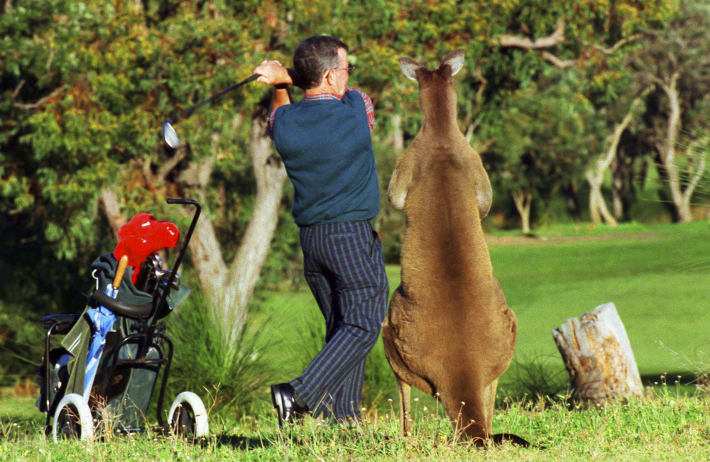 Golf fan
