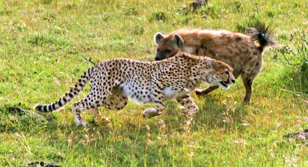 Masai Mara dispute
